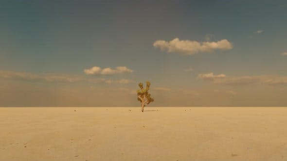 Desert and Cactus Tree