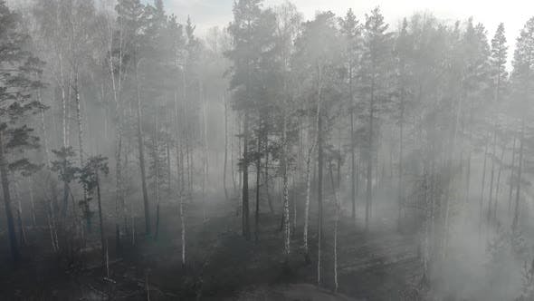 Scorched Earth and Tree Trunks After a Spring Fire in Forest. Black Burnt Field with Fresh Sprouts