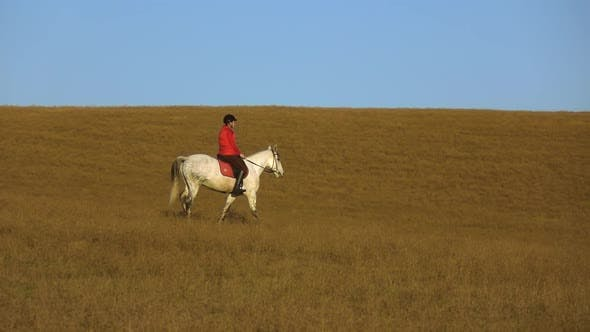 Thumbnail for Woman Sits on a Horse Side View an Athlete Rides on a Horse