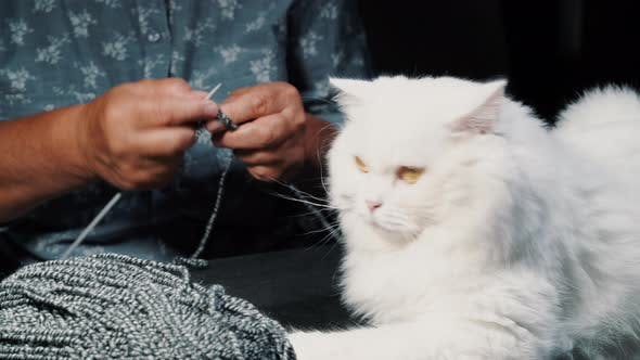 Thumbnail for White furry cat sitting near woolen yarn while elderly woman knitting sweater or scarf for winter