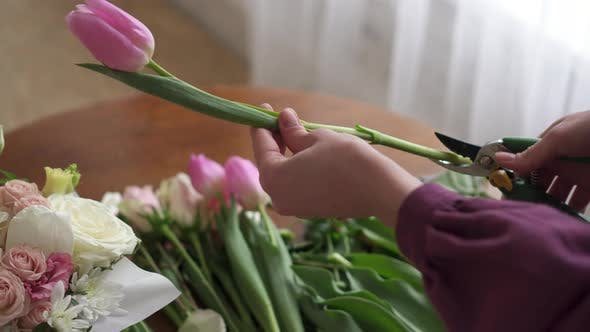 Female Florist's Hands Pruned with Tulle Stalks