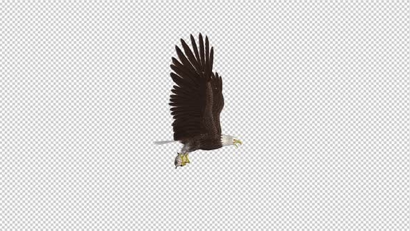 Thumbnail for Bald Eagle with Salmon Fish - 4K Flying Loop - Side View