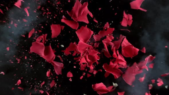 Thumbnail for Red rose flower exploding in super slow motion, shot with Phantom Flex 4K