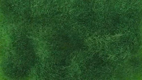Grass Blowing Loop