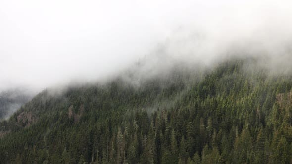 Thumbnail for Mountain Forest Fog Time Lapse Rich Nature Colors Green White