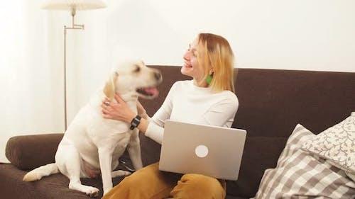Junge Geschäftsfrau spielt mit einem großen weißen Hund in der Wohnung auf der Couch