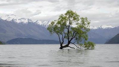 Timelapse that Wanaka Tree