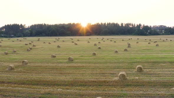 Thumbnail for Many Stack Of Hay