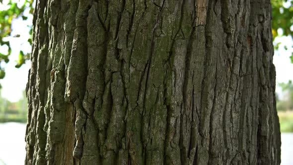 Cover Image for Hitting On A Horizontal Panoramic Scene Of Oak Bark.