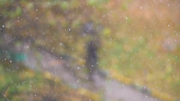 Thumbnail for Snow Falling Against Defocused Autumn Background