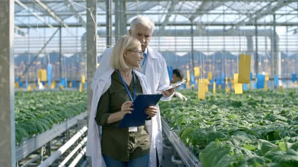 Thumbnail for Agronomists Inspecting Plants Growing in Greenhouse