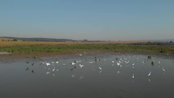 Swamp Birds in the Marsh