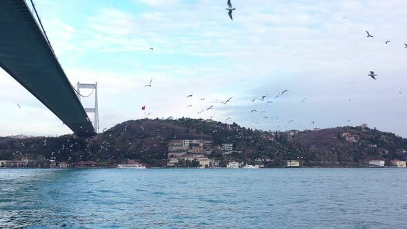 Thumbnail for Istanbul Bosphorus Passing Under Bridge With Seagulls
