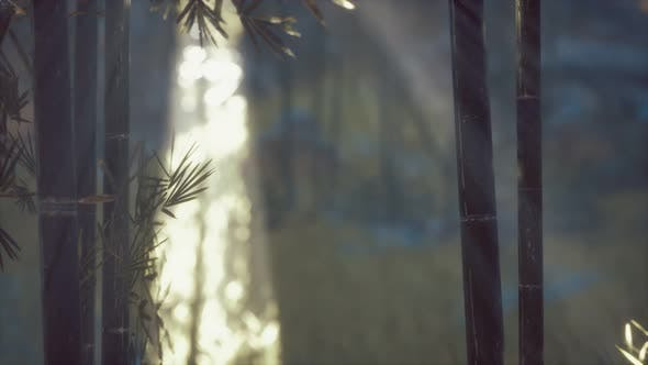 Thumbnail for Asian Bamboo Forest with Sunlight