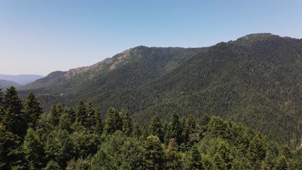 Mountian Forest Aerial View