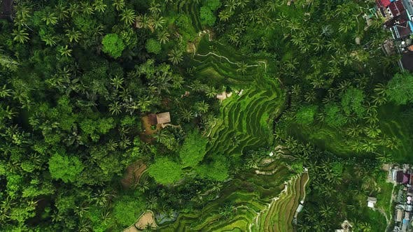 Thumbnail for Amazing Landscape Above Rice Terraces