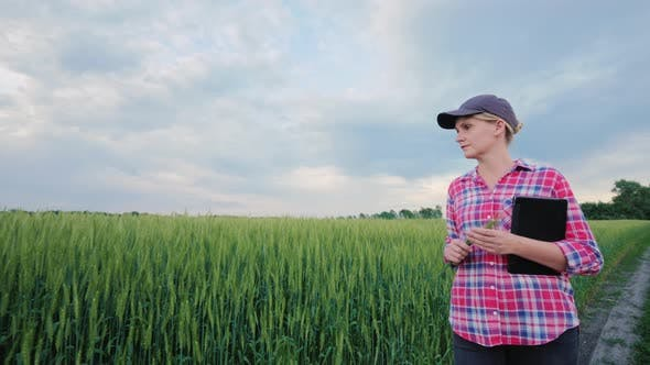 Cover Image for A Female Farmer with a Tablet Walks Along a Green Wheat Field