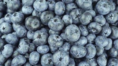 Common Blueberry A Type Of Deciduous Shrub.