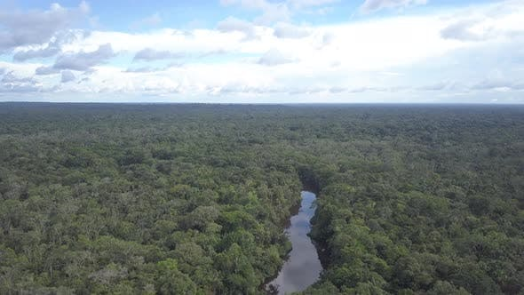 Cover Image for Aerial of River in Vast Endless Unbroken Amazon Jungle Wilderness