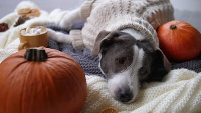 Seasonal Fall Atmosphere at Home