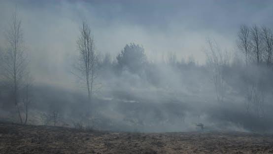 Heavy Smoke Forest Fire Ukraine In Spring