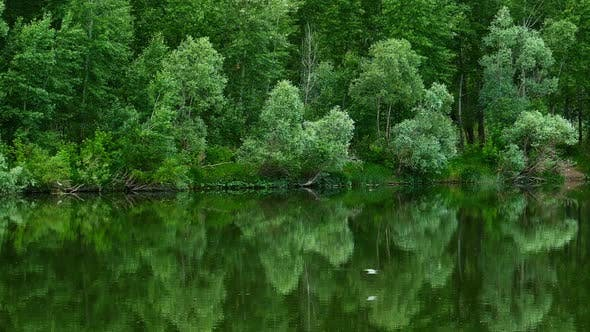 Thumbnail for Forest on Bank of River Is Reflected and Seagulls