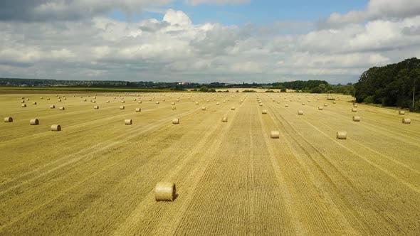 Field With a Straw