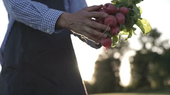 Thumbnail for Organic Vegetables. Farmer Hands With Freshly Harvested Vegetables