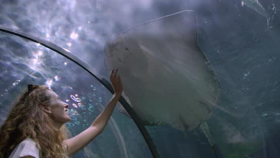 Thumbnail for Woman in the Oceanarium Touches the Glass in the Place Where a Cramp-fish.
