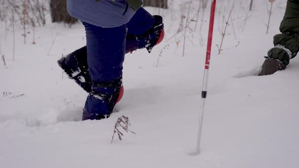Thumbnail for Team of Hikers in Winter Forest with Ski Poles, Hard To Walk Through Thick Snow.