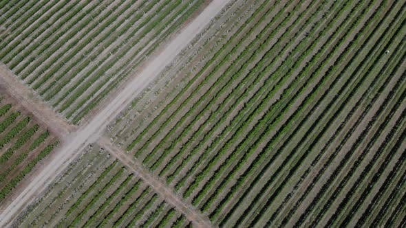 Thumbnail for Aerial View of Vineyard