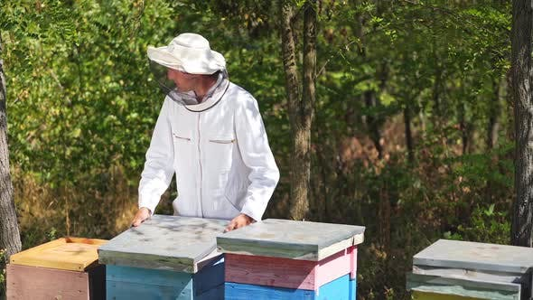 Beekeeper is working with bees and beehives on the apiary. Bees on honeycomb.