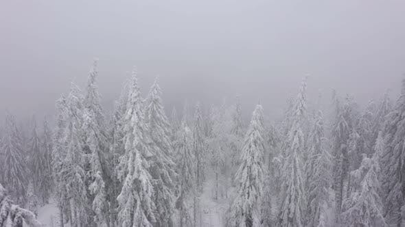 Aerial View of Snow Covered Trees in the Mountains in Winter in Foggy Weather