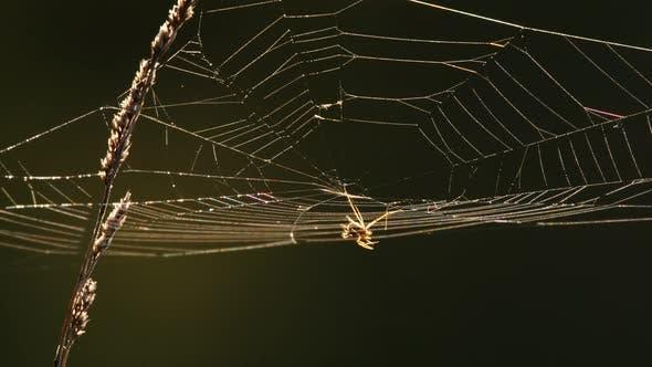 Thumbnail for Spider Web at Back Light