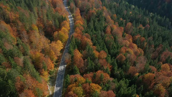 Thumbnail for Flying Over The Empty Autumn Road