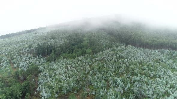 Thumbnail for Aerial View of Lush Green Rain Forest Mountain