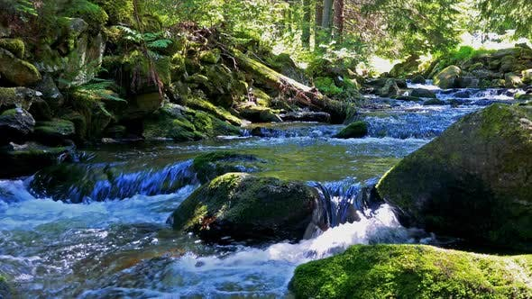 Thumbnail for River in the Forest with Stones - Sunny Day