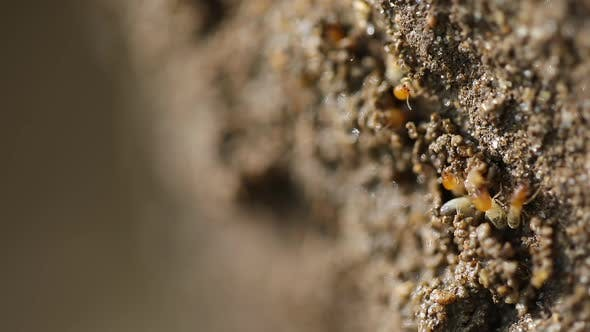 Thumbnail for Termites Repairing Mound