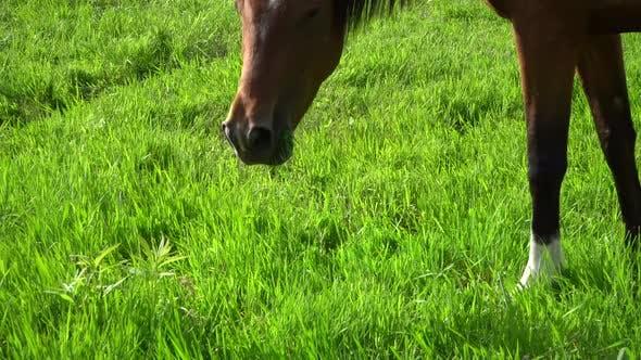 Sommer, Pferd, Wiese 6