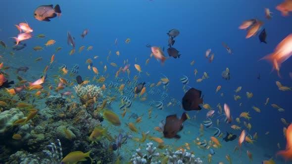 Thumbnail for Marine Life Fish Scene