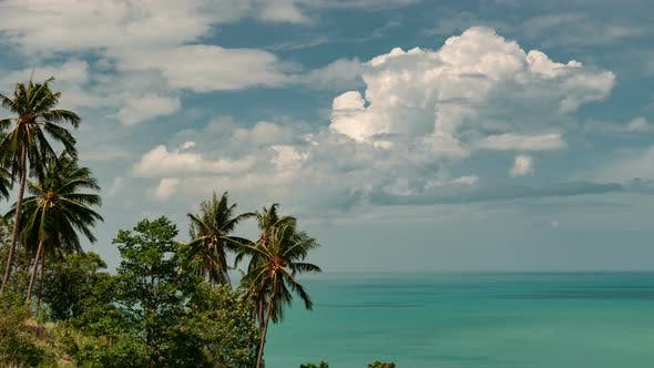 Thumbnail for Tropical palms on background on the sky and sea
