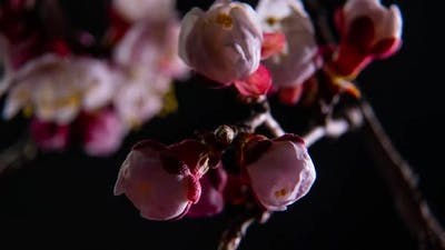 Spring Flowers Opening