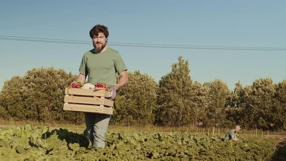 Thumbnail for Male Farmer with Box of Ripe Vegetables