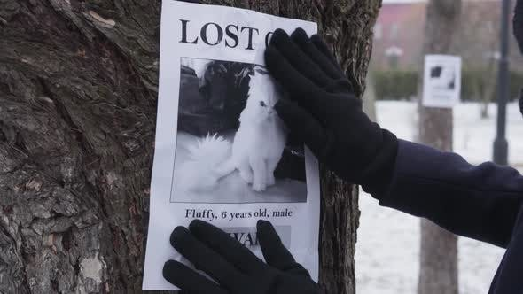 Close-up of Female Hands in Winter Gloves Hanging Missing Cat Ad on the Tree, Female Pet Owner