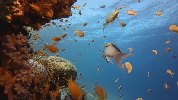 Thumbnail for Reef Marine Scene