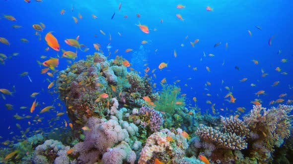 Thumbnail for Tropical Underwater View