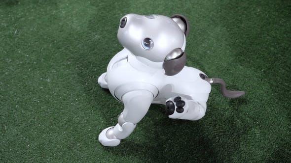 Thumbnail for Netter Roboter Hund führt Befehle aus.