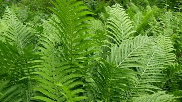 Thumbnail for Green Shrub Tree
