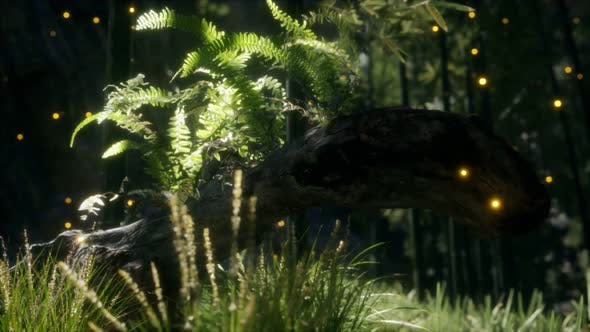 Horizontally Bending Tree Trunk with Ferns Growing, and Sunlight Shining