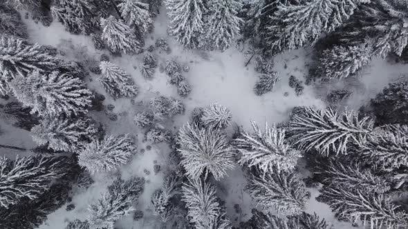 Thumbnail for Aerial winter footage. Flying over frozen forest in snowy day